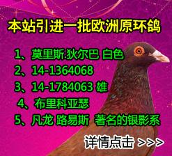 欧洲原环名鸽,所有进口名鸽附有英文血统书以及中文翻译