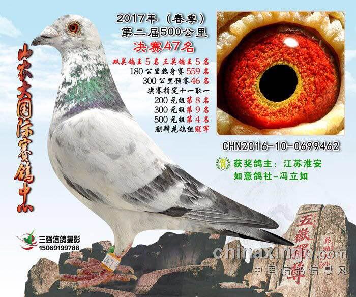 淮安如意鸽社精心育赛信鸽30多年来承得鸽友们关心和支持,本人现已退休急于迁居南京决定全棚四折优惠鸽友