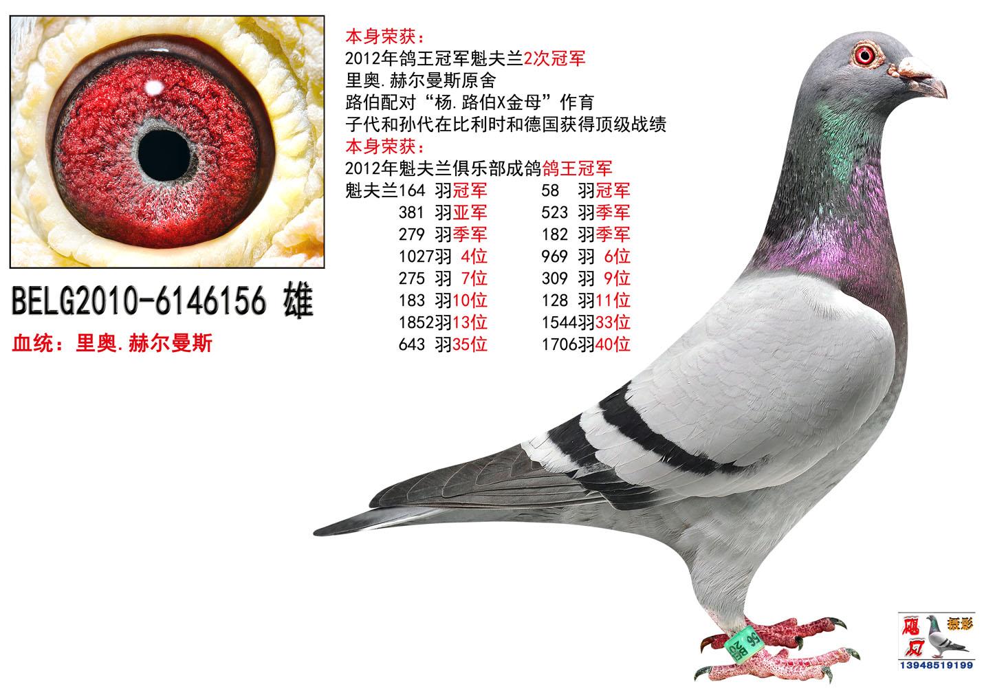 成吉思汗家园欢迎全国鸽友信息交流!